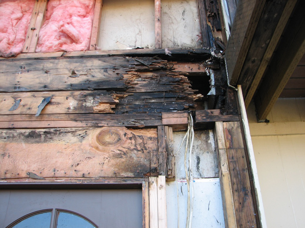 close up image of dry rot caused by interior water intrustion in Marin