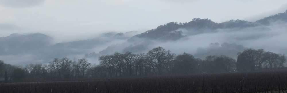 panoramic view of Sonoma County hillside shouded in fog