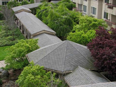 Shingle Roof Maintenance/Marin County/San Rafael, CA